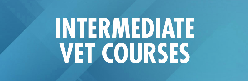 Intermediate-VET-courses